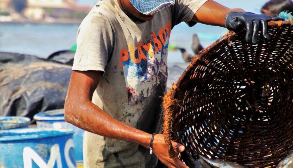 fish-market-3244813_1920